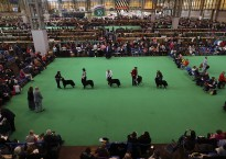 Second Day Of Crufts 2015
