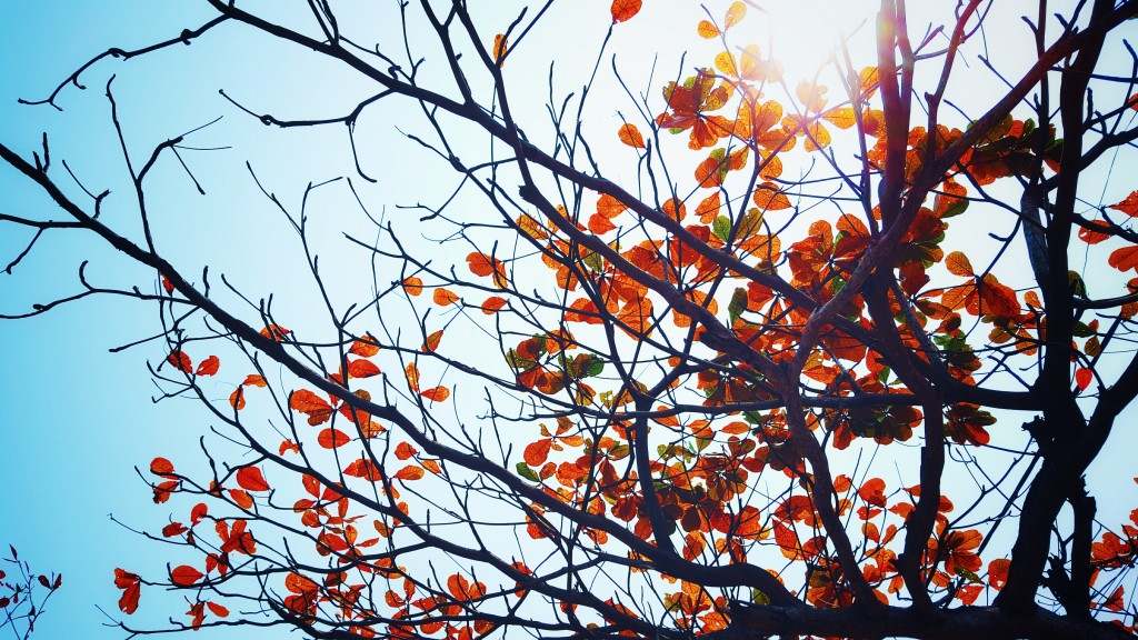 Autumn leaves | Butlins Blog | taken from Static Pexels