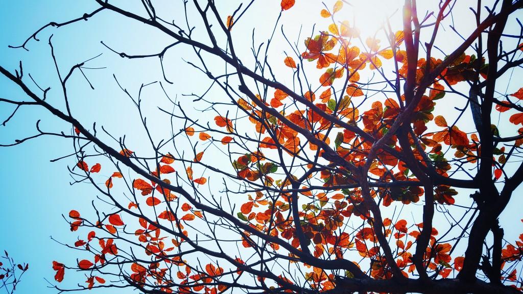 Autumn leaves | Butlins Blog | taken from Static Pexels